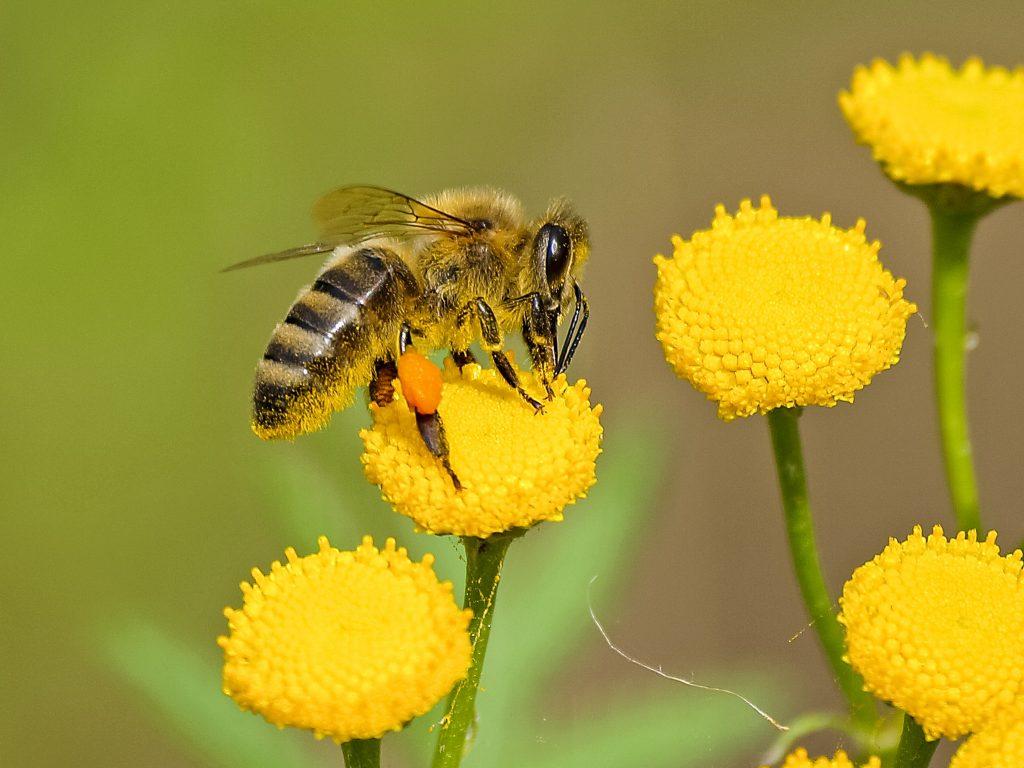albina-produse-apicole-miere